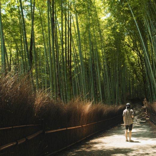 Japonsko / Arashiama bamboo forest self-portrait